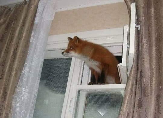 Firefox_Windows